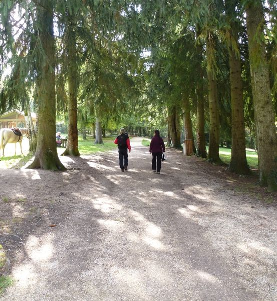 Walks in the forest of Rothonne