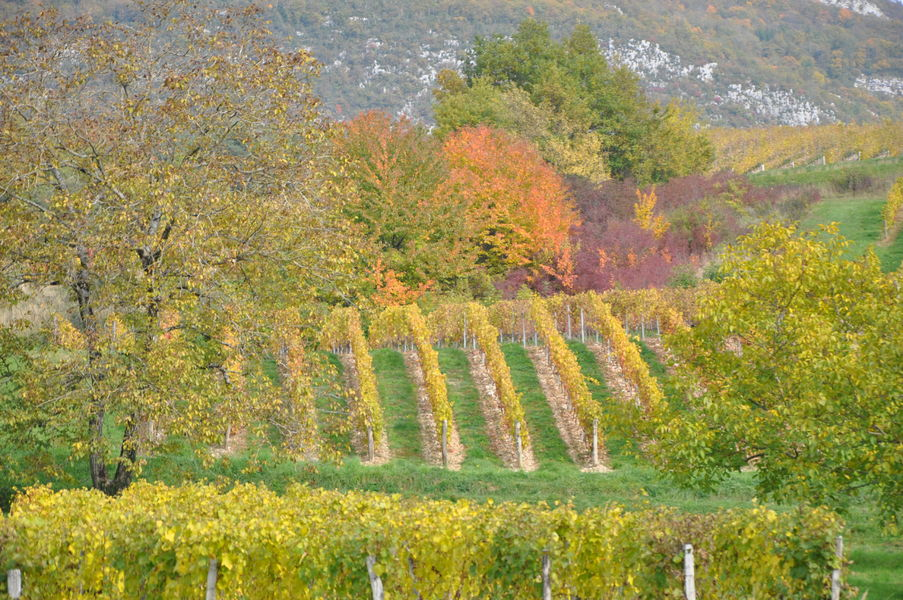 Destination Vineyards and Discoveries